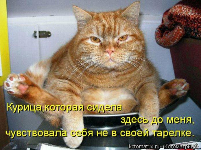 Чудная котоматрица 1