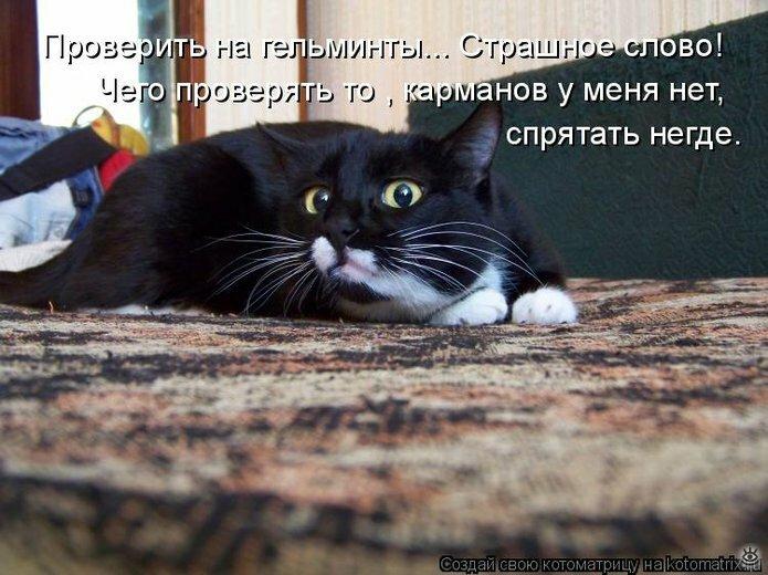 Чудная котоматрица 4