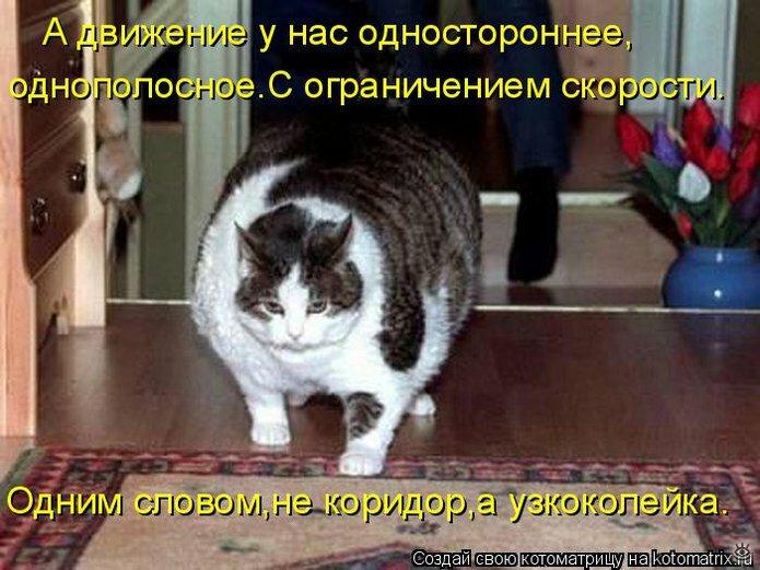 Чудная котоматрица 8