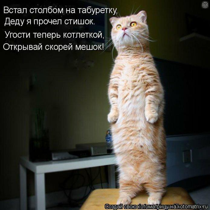 Чудная котоматрица 9