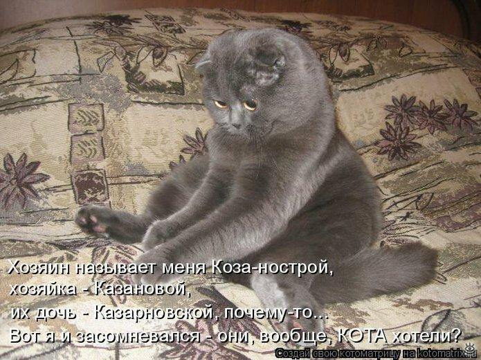 Чудная котоматрица 14