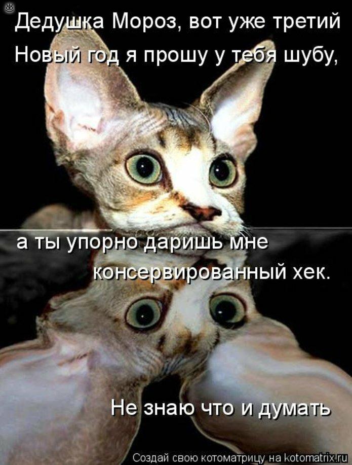 Чудная котоматрица 16
