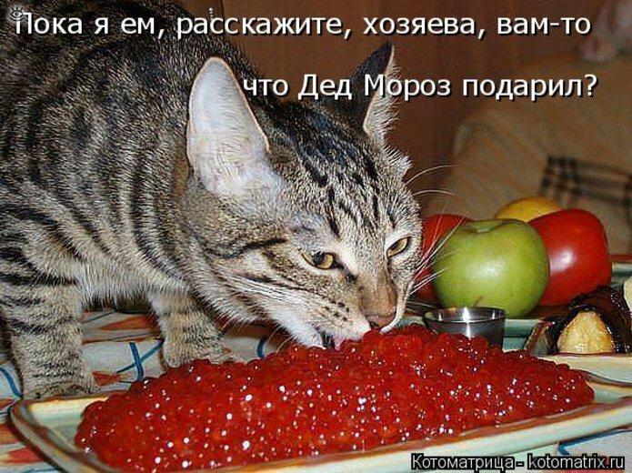 Чудная котоматрица 17