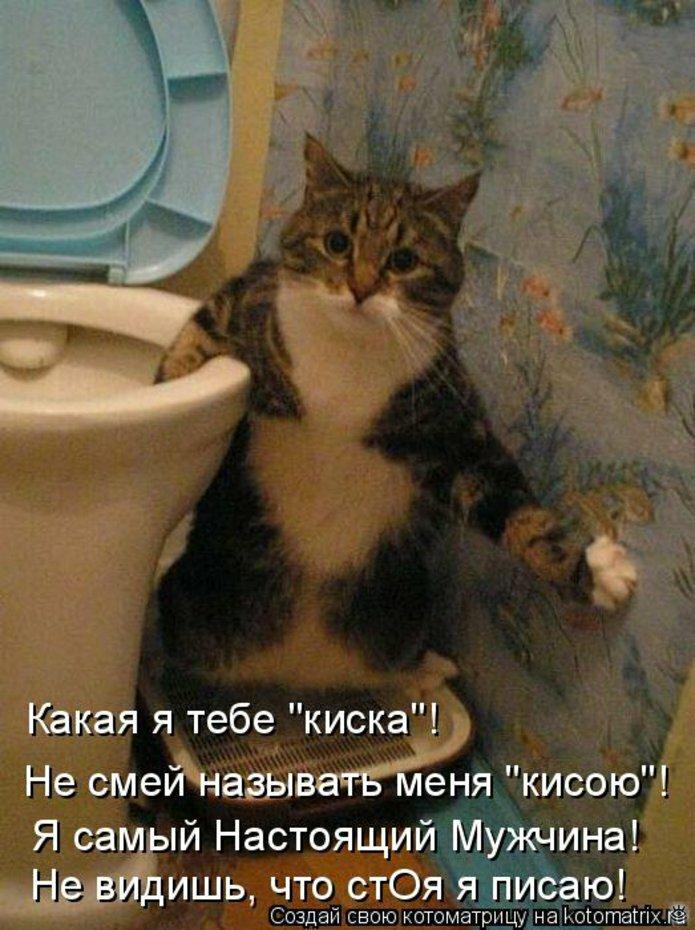 Чудная котоматрица 21