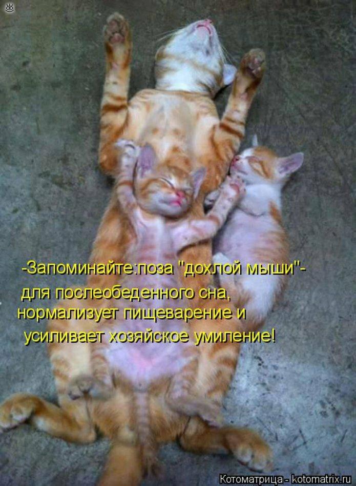 Чудная котоматрица 24