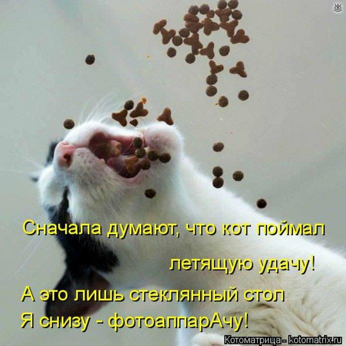 Чудная котоматрица 27