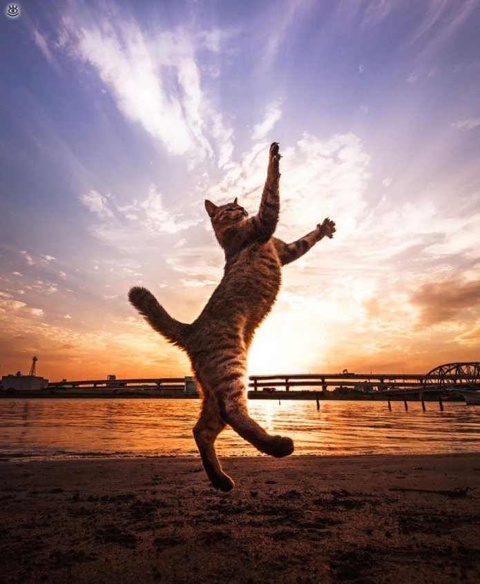 Кошачьи фото, сделанные точно в момент 3