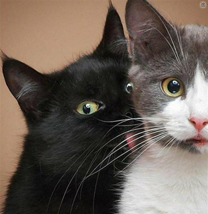 Кошачьи фото, сделанные точно в момент 4