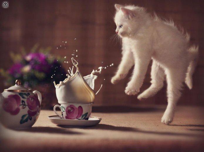 Кошачьи фото, сделанные точно в момент 6