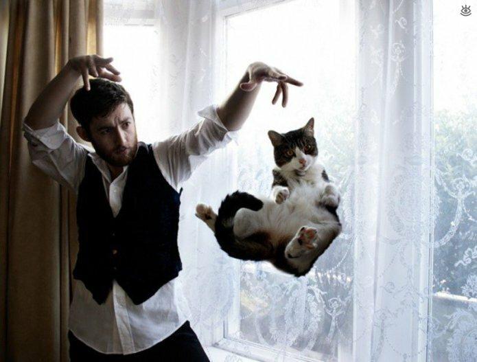 Кошачьи фото, сделанные точно в момент 7