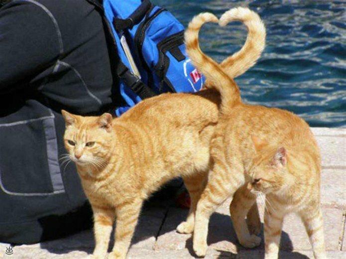Кошачьи фото, сделанные точно в момент 12