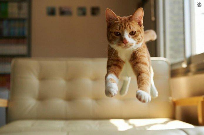 Кошачьи фото, сделанные точно в момент 14