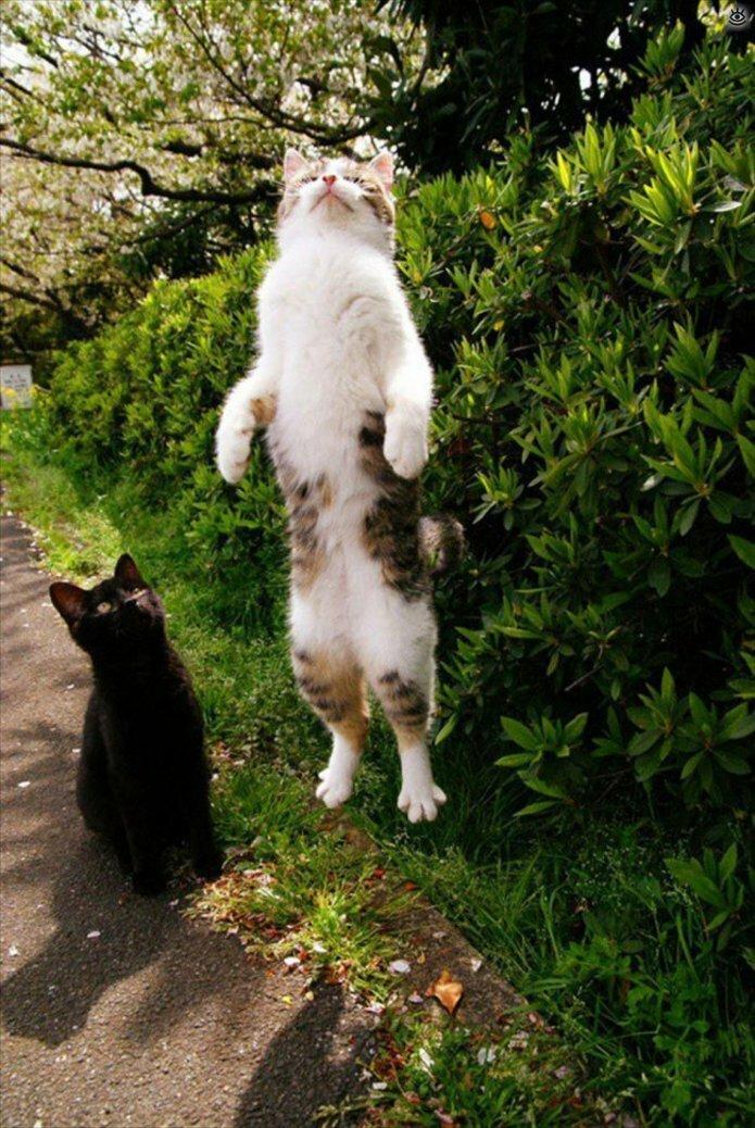 Кошачьи фото, сделанные точно в момент 15