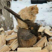 Фото приколы Кошачьи фото, сделанные точно в момент (16 фото)