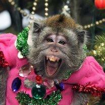Смешные и курьёзные фото из жизни смешных фото приколов