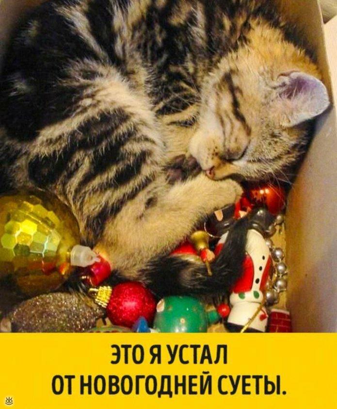 Животные, готовые к Новому году 4