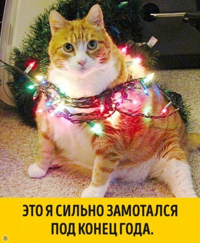 Животные, готовые к Новому году 7