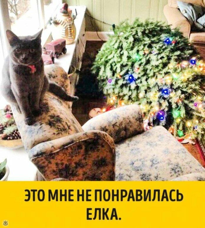 Животные, готовые к Новому году 10