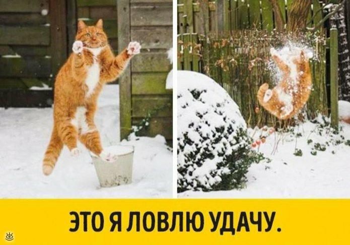 Животные, готовые к Новому году 12
