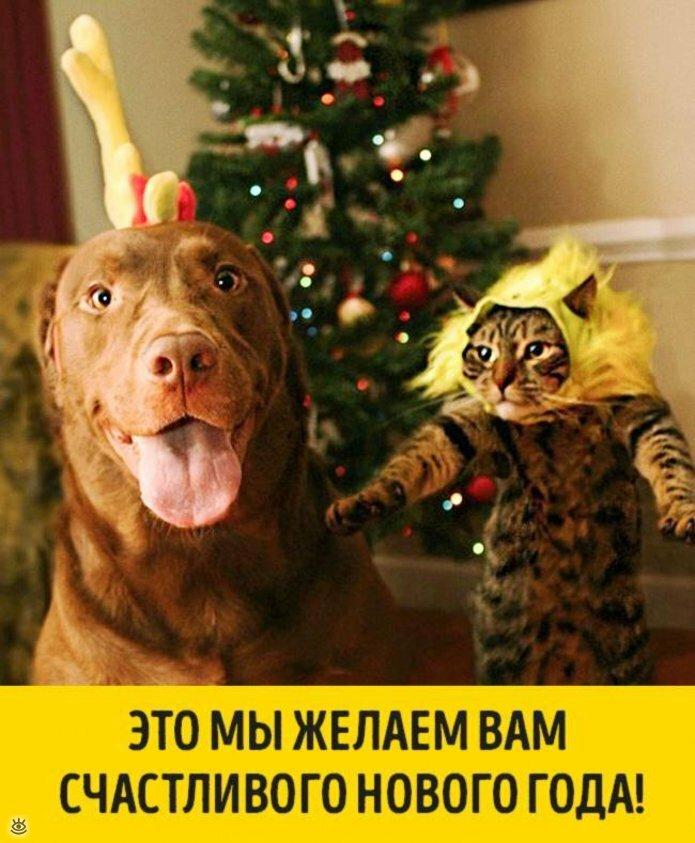 Животные, готовые к Новому году 13