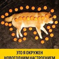 Фото приколы Животные, готовые к Новому году (14 фото)