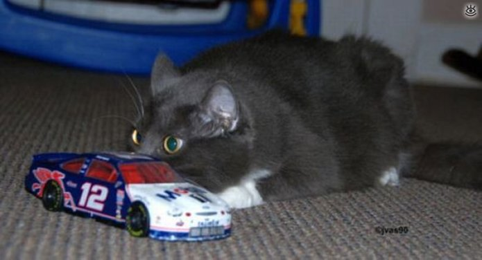Кошки маскируются и прячутся 1