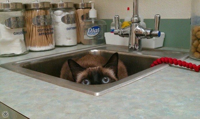 Кошки маскируются и прячутся 3