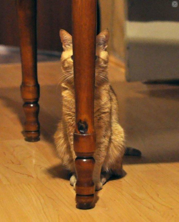 Кошки маскируются и прячутся 4