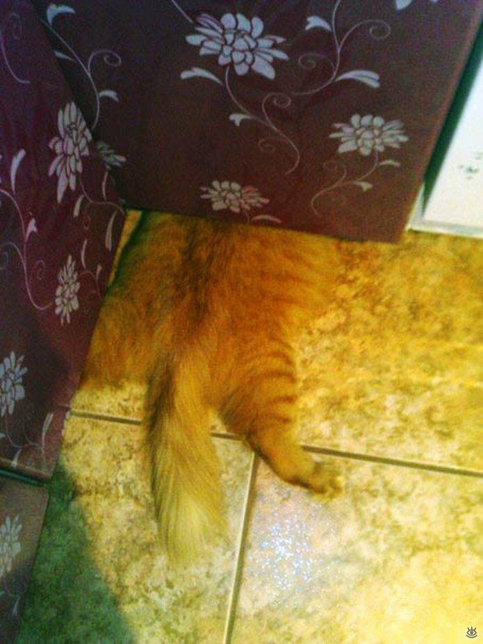Кошки маскируются и прячутся 6