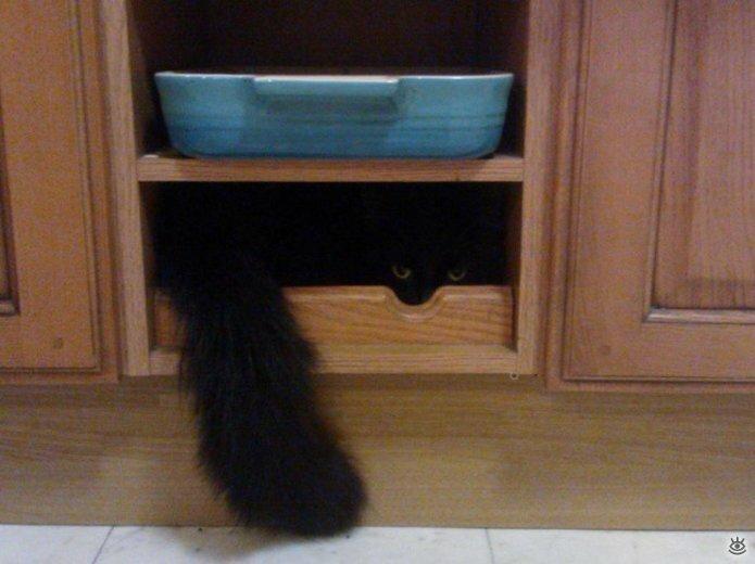 Кошки маскируются и прячутся 7