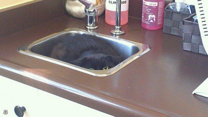 Кошки маскируются и прячутся 10