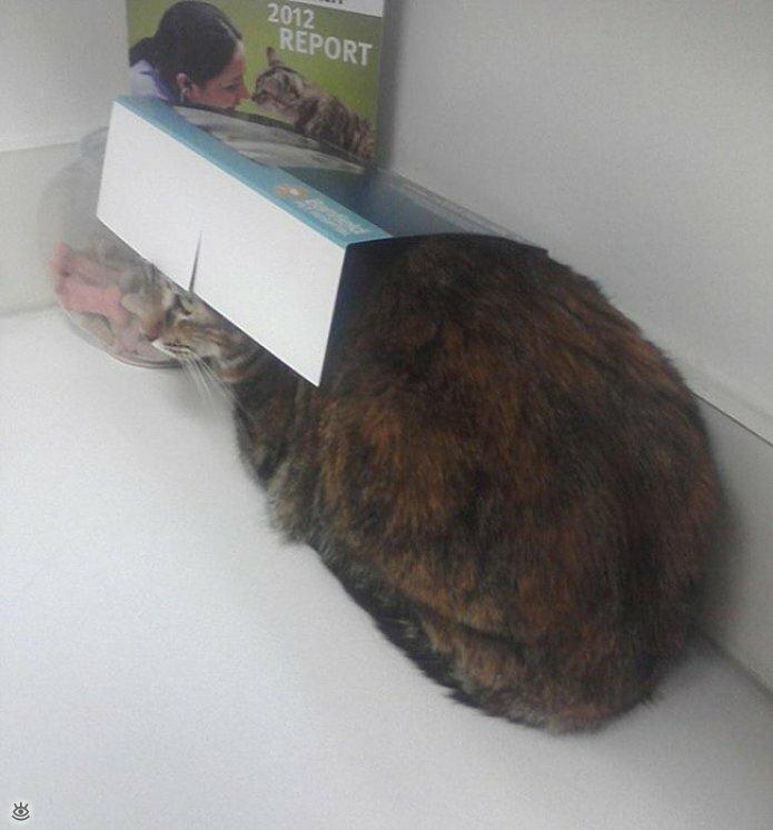 Кошки маскируются и прячутся 12