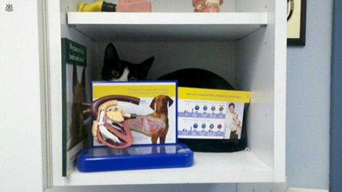 Кошки маскируются и прячутся 14