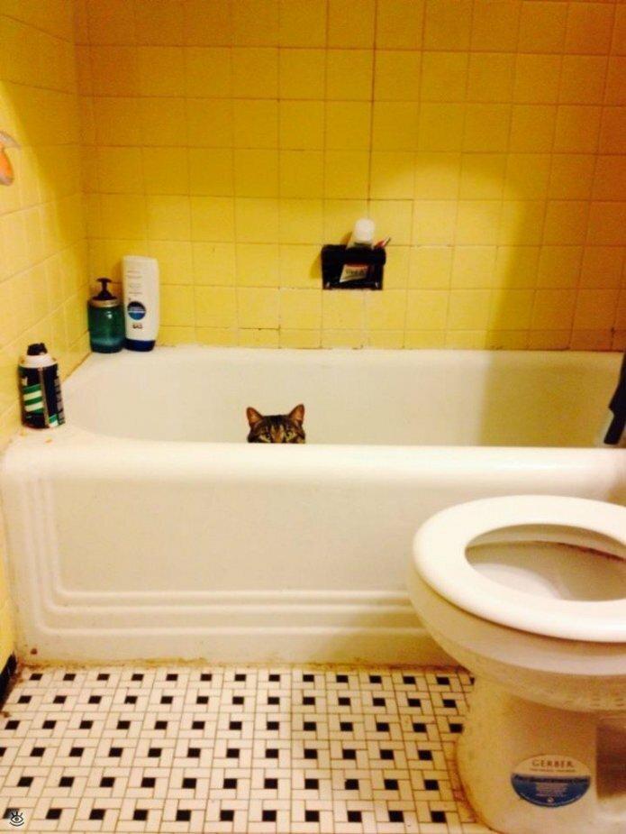 Кошки маскируются и прячутся 16
