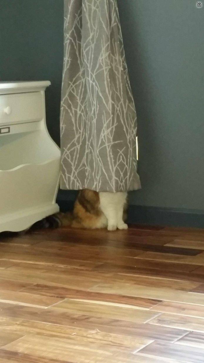 Кошки маскируются и прячутся 18