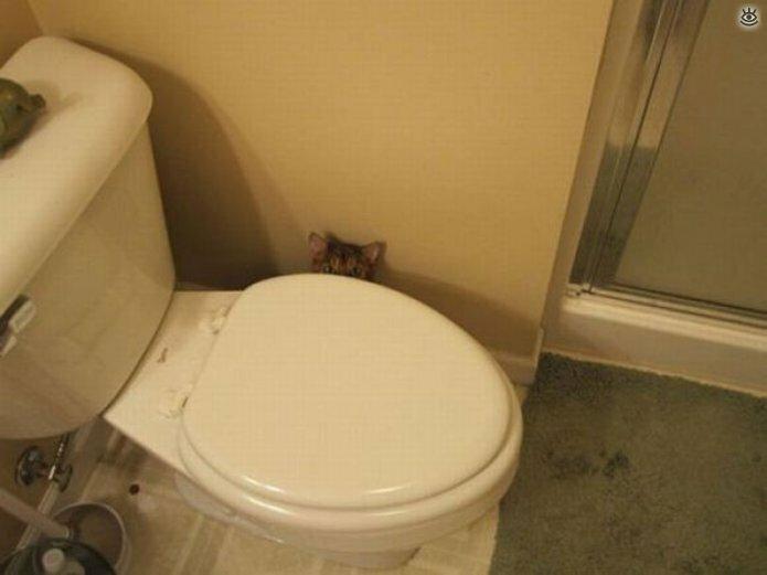 Кошки маскируются и прячутся 19