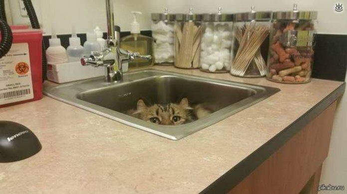 Кошки маскируются и прячутся 20