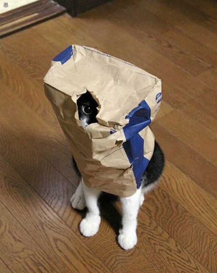 Кошки маскируются и прячутся 21