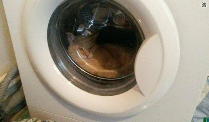 Кошки маскируются и прячутся 22