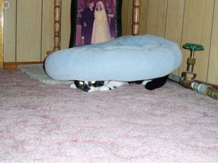 Кошки маскируются и прячутся 23