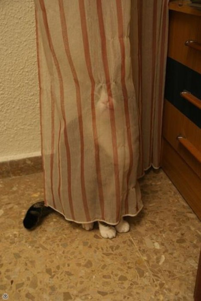 Кошки маскируются и прячутся 26