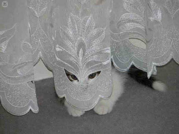 Кошки маскируются и прячутся 28