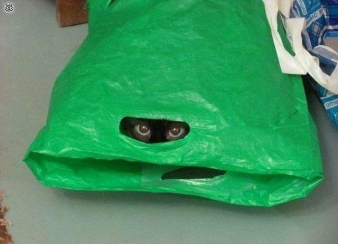 Кошки маскируются и прячутся 29
