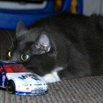 Фото приколы Кошки маскируются и прячутся (30 фото)