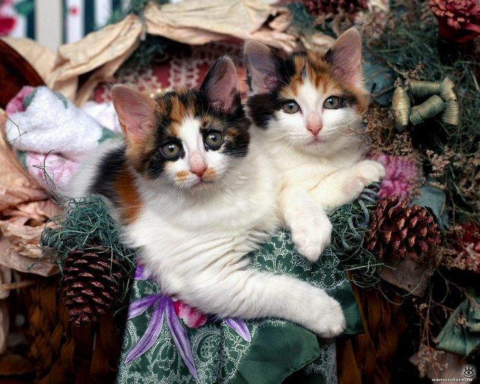 Новогодние котяры 0