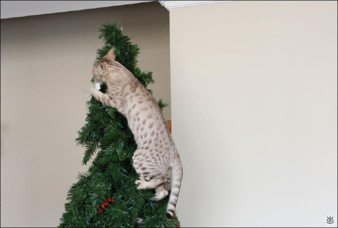 Новогодние котяры 1