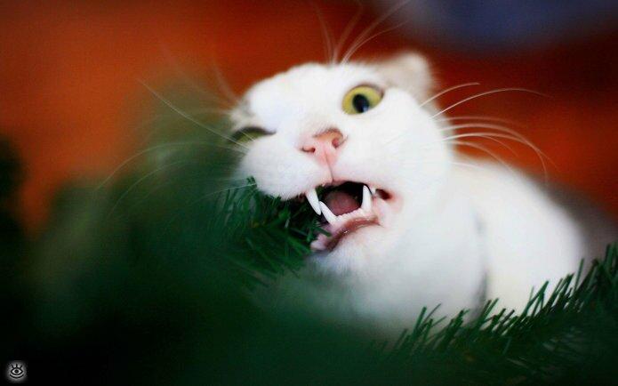 Новогодние котяры 2