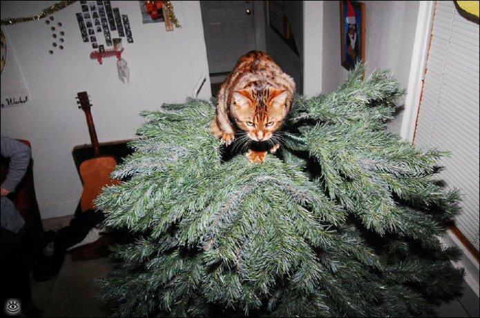 Новогодние котяры 3