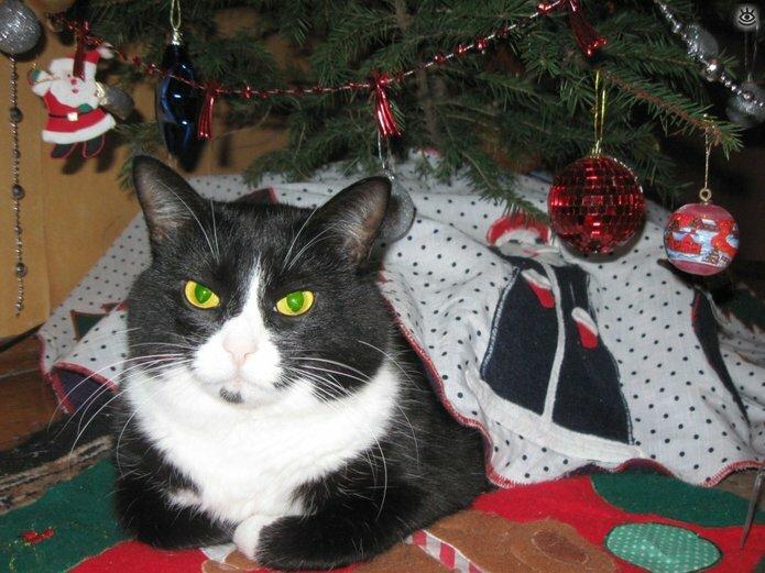 Новогодние котяры 4