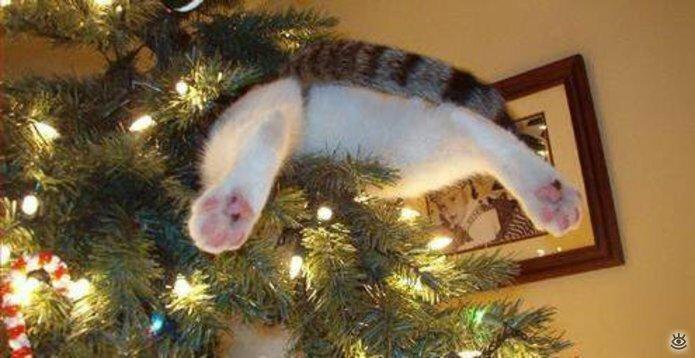 Новогодние котяры 5
